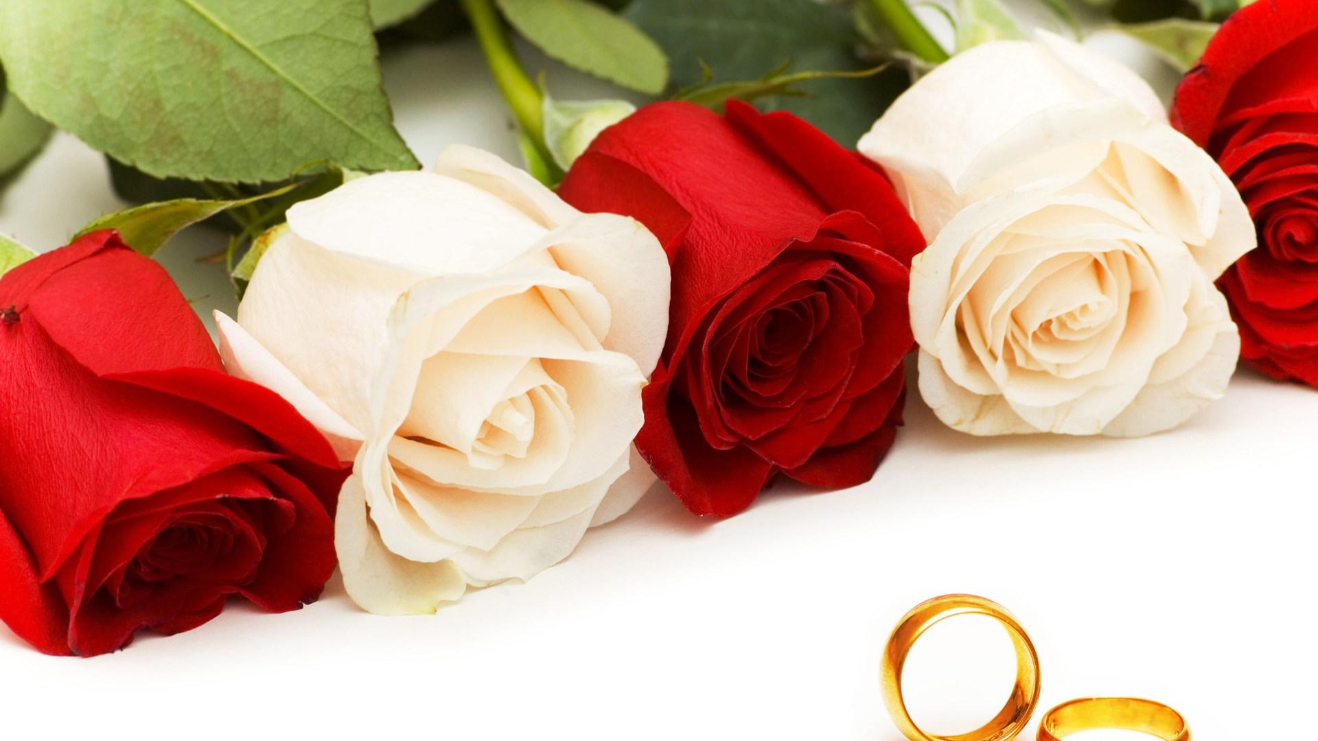 Красивые картинки роз на весь экран на рабочий стол - подборка 14