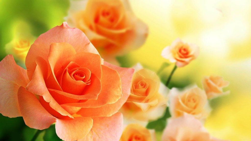 Красивые картинки роз на весь экран на рабочий стол - подборка 2