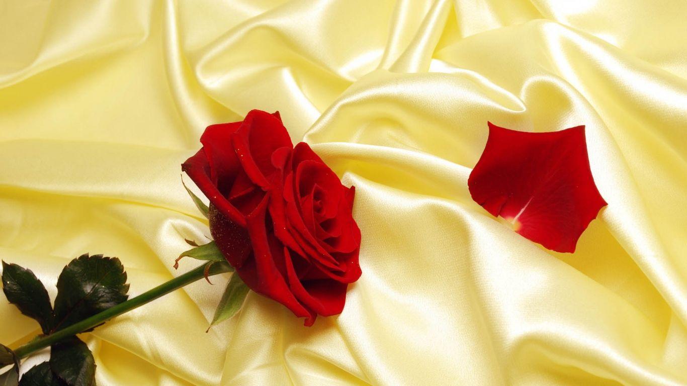 Красивые картинки роз на весь экран на рабочий стол - подборка 4