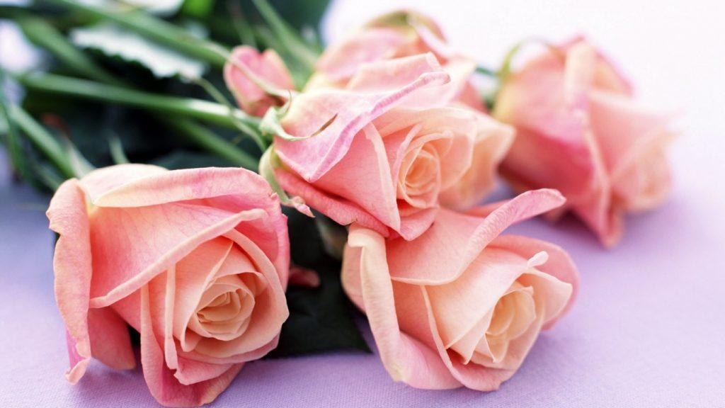 Красивые картинки роз на весь экран на рабочий стол - подборка 5