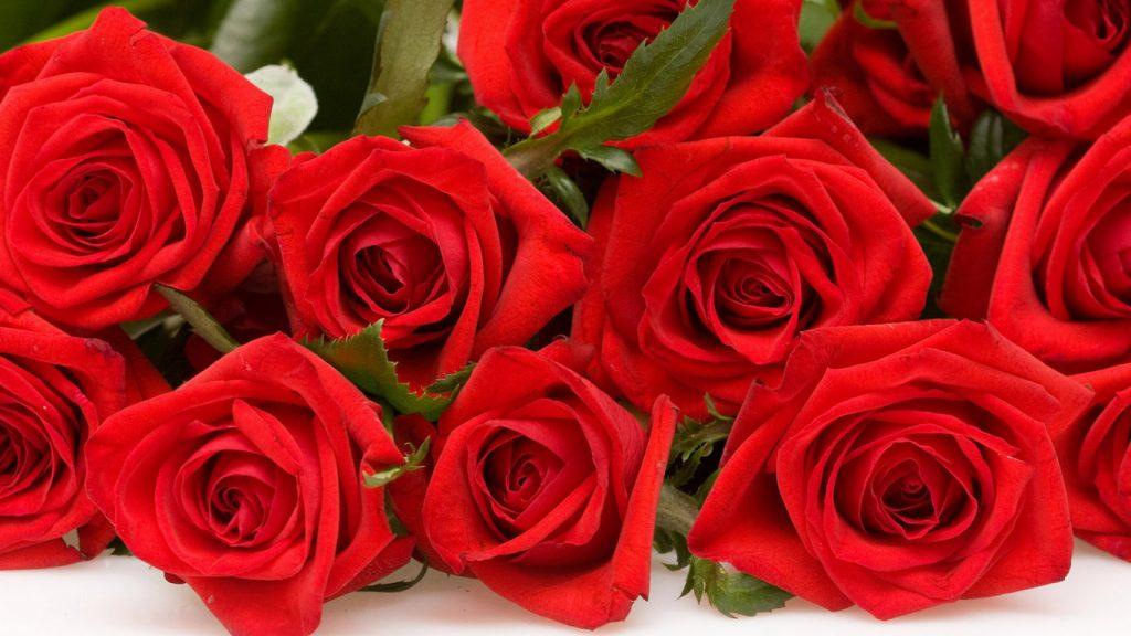 Красивые картинки роз на весь экран на рабочий стол - подборка 8