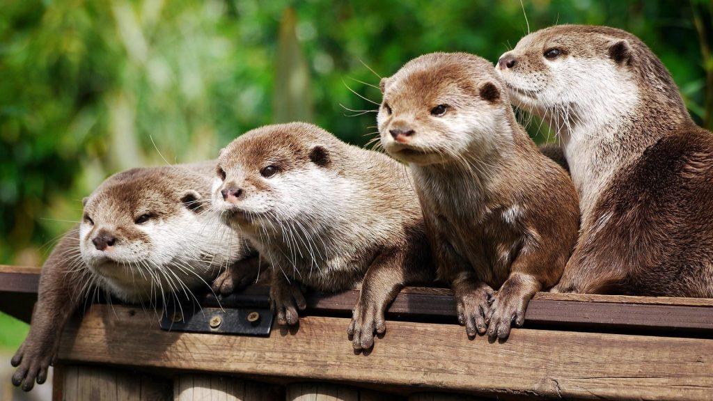 Красивые фото животных на рабочий стол - подборка №7 13