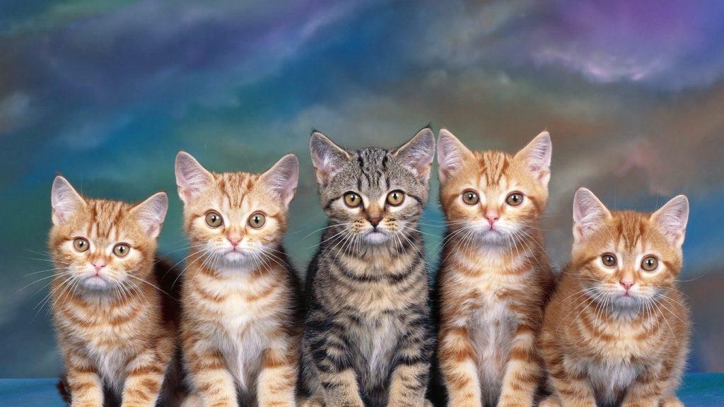 Красивые фото животных на рабочий стол - подборка №7 7