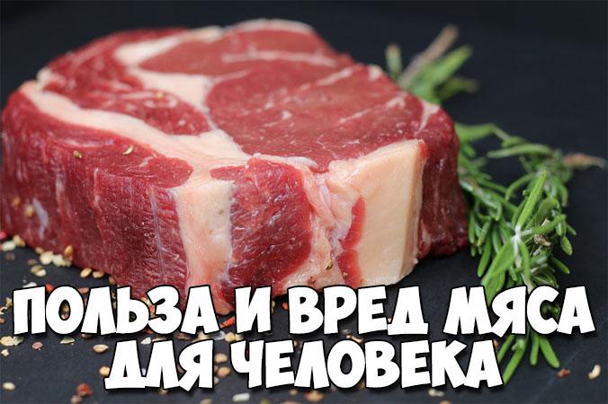 Польза и вред мяса для человека. Основные полезные свойства 1