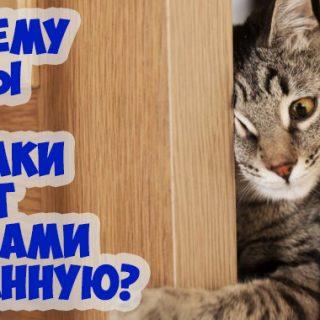 Почему коты или собаки идут за вами в ванную Зачем они это делают 1