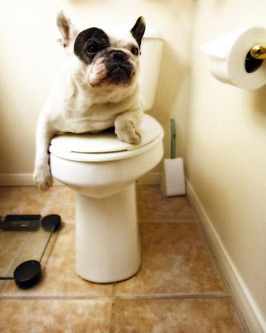 Почему коты или собаки идут за вами в ванную Зачем они это делают 2