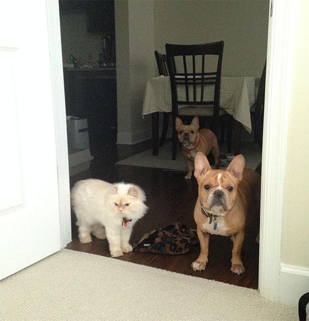 Почему коты или собаки идут за вами в ванную Зачем они это делают 4