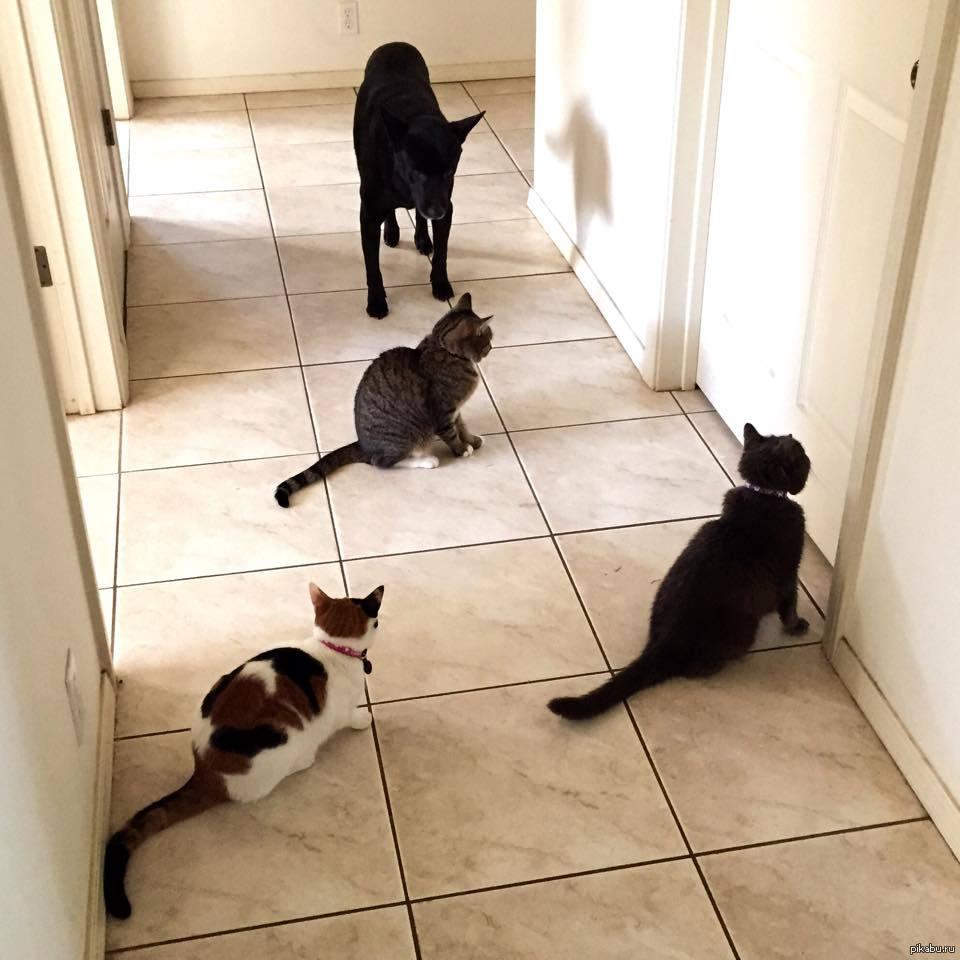 Почему коты или собаки идут за вами в ванную Зачем они это делают 5
