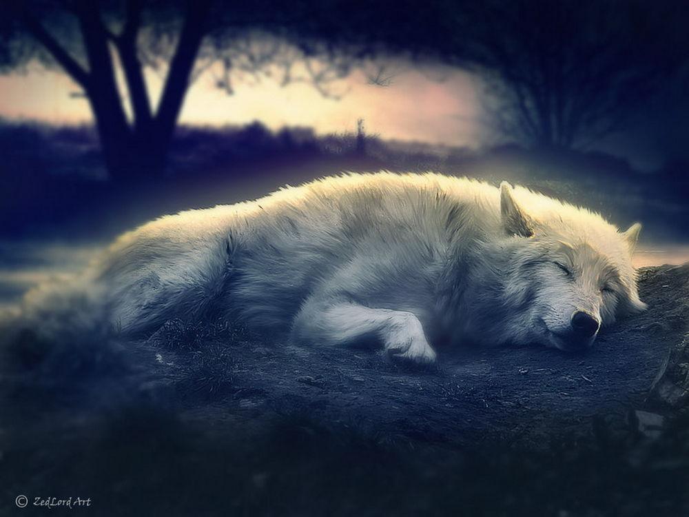 Прикольные и красивые арт картинки волка. Нарисованный волк, фэнтези 11