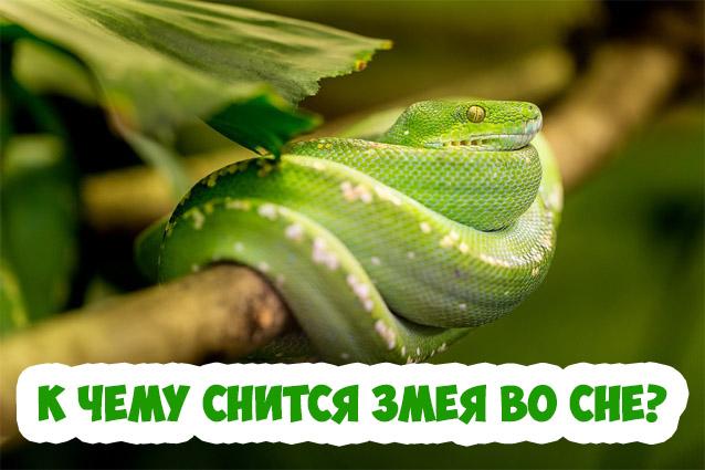 К чему беременной снится змея 6