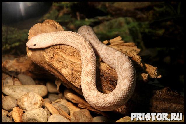 Приснилась змея, к чему снится змея - толкование сонник 3
