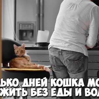Сколько дней кошка может прожить без еды и воды - интересные факты 1
