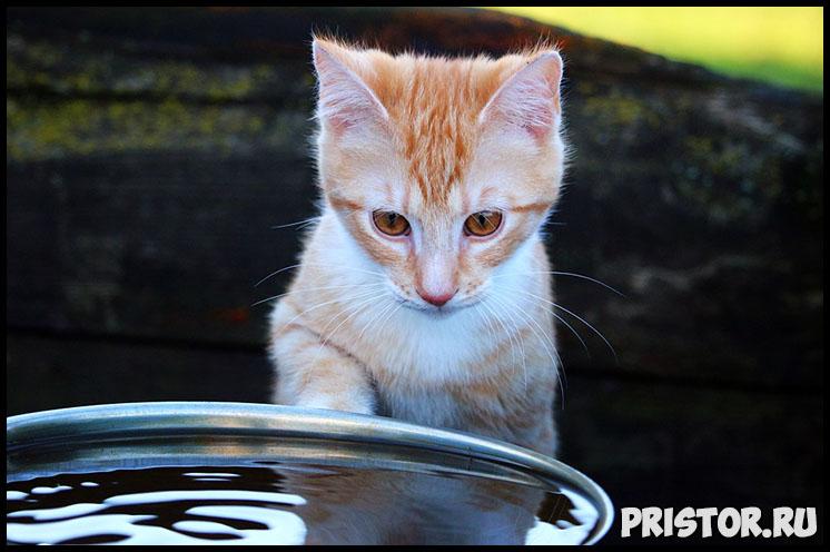 Сколько дней кошка может прожить без еды и воды - интересные факты 3