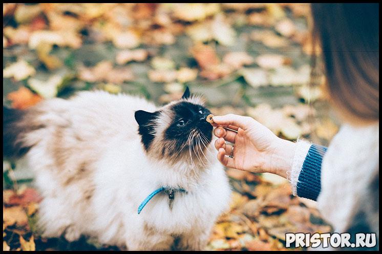 Сколько дней кошка может прожить без еды и воды - интересные факты 4
