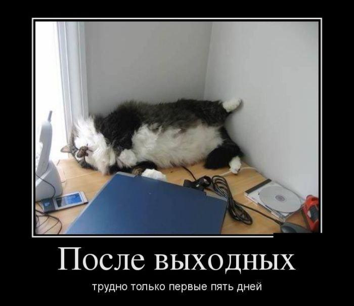 Смешные и ржачные картинки с надписями про работу - сборка 5