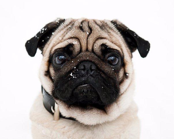 Смешные картинки про животных для детей - подборка изображений 10