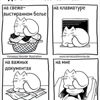 18 прикольных комиксов, в которых себя узнает каждый владелец кота - подборка 18
