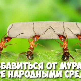 Как избавиться от муравьев в квартире народными средствами - лучшие способы 1