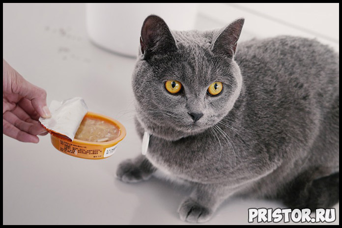 Как отучить кота гадить в неположенном месте - эффективные способы 2