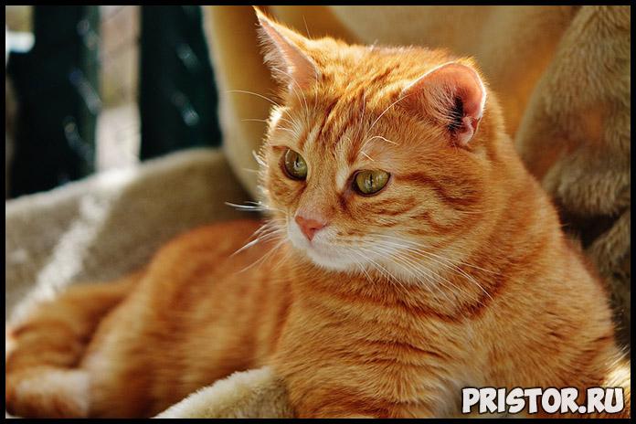 Как отучить кота гадить в неположенном месте - эффективные способы 3