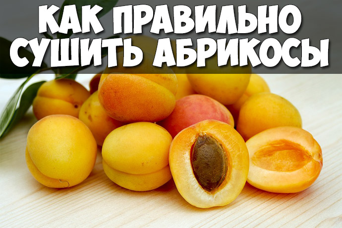 Как правильно сушить абрикосы в домашних условиях - лучшие советы 1