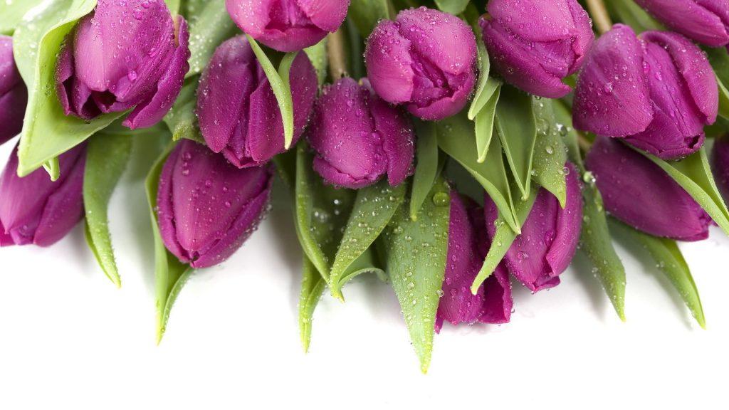 Красивые картинки на рабочий стол тюльпаны - подборка 1