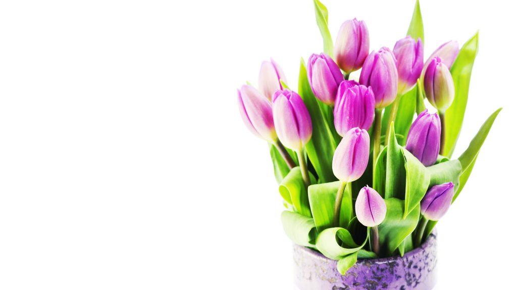 Красивые картинки на рабочий стол тюльпаны - подборка 11