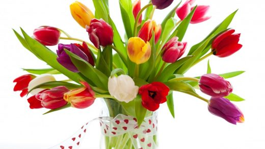 Красивые картинки на рабочий стол тюльпаны - подборка 14