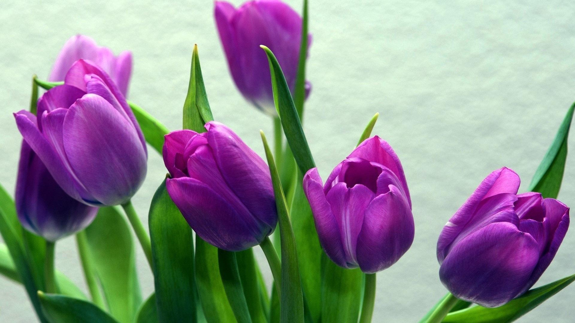 Красивые картинки на рабочий стол тюльпаны - подборка 3