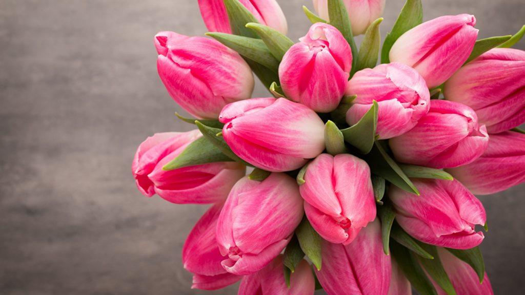 Красивые картинки на рабочий стол тюльпаны - подборка 5