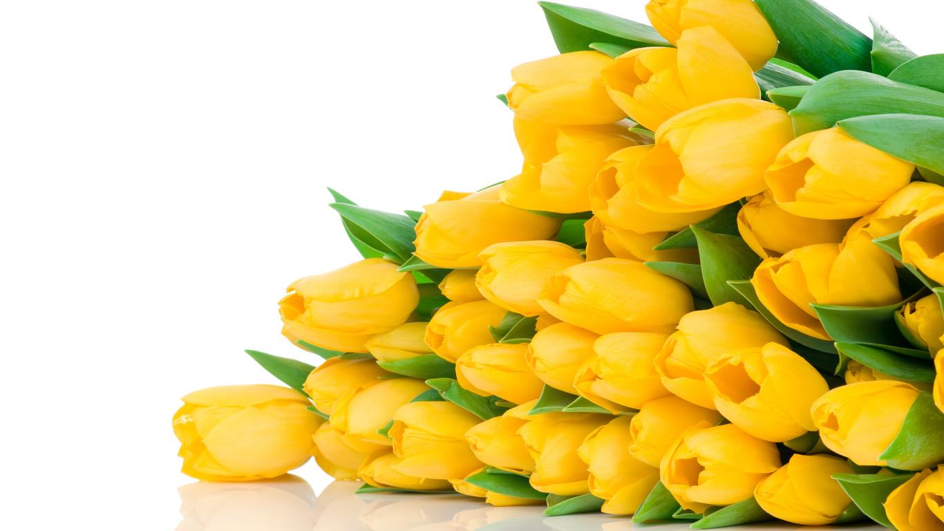 Красивые картинки на рабочий стол тюльпаны - подборка 7
