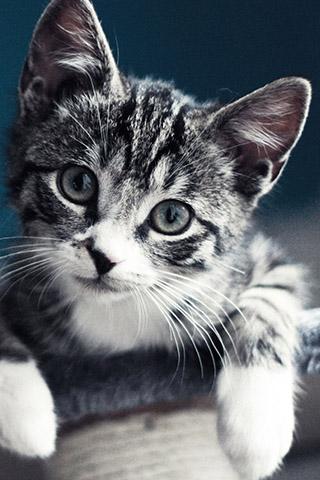 Красивые картинки на телефон котята и кошечки - подборка 10
