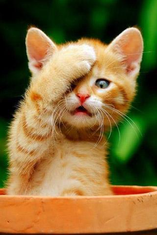Красивые картинки на телефон котята и кошечки - подборка 11