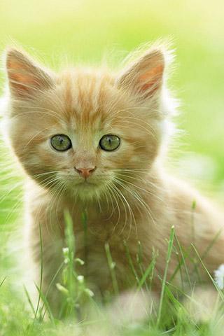 Красивые картинки на телефон котята и кошечки - подборка 13