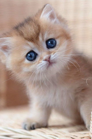 Красивые картинки на телефон котята и кошечки - подборка 15