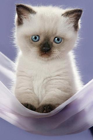 Красивые картинки на телефон котята и кошечки - подборка 2