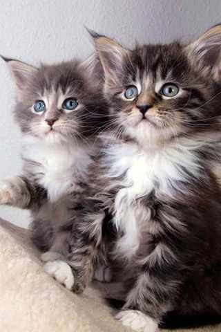 Красивые картинки на телефон котята и кошечки - подборка 3
