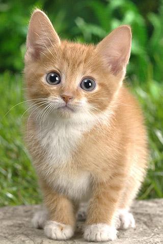 Красивые картинки на телефон котята и кошечки - подборка 5