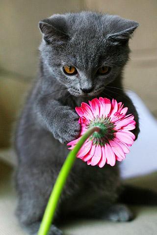 Красивые картинки на телефон котята и кошечки - подборка 7