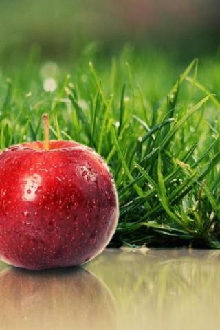 Красивые картинки на телефон фрукты - самые прикольные, сборка 17