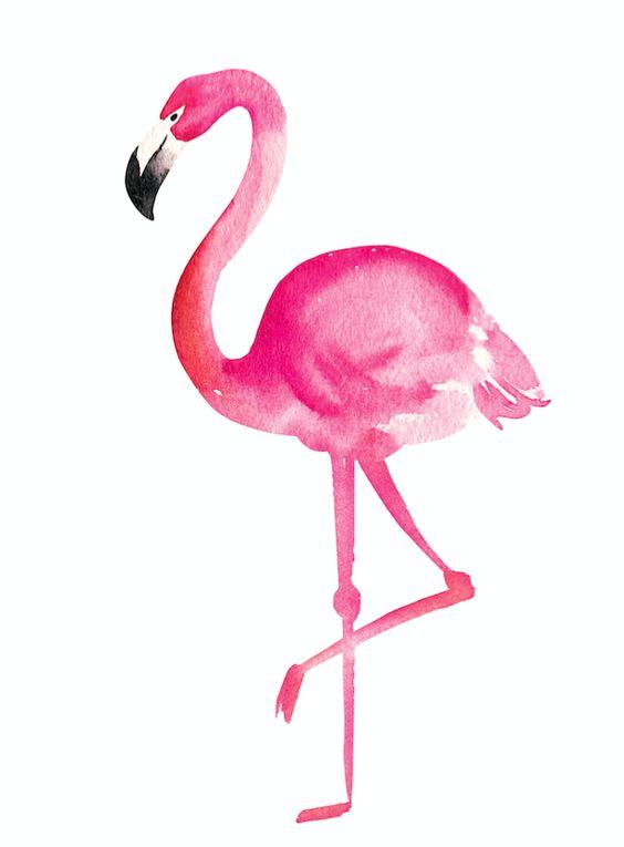 Красивые картинки фламинго для срисовки - интересная подборка 1