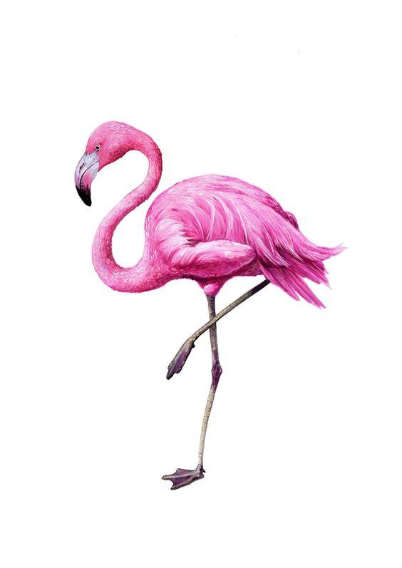 Красивые картинки фламинго для срисовки - интересная подборка 4