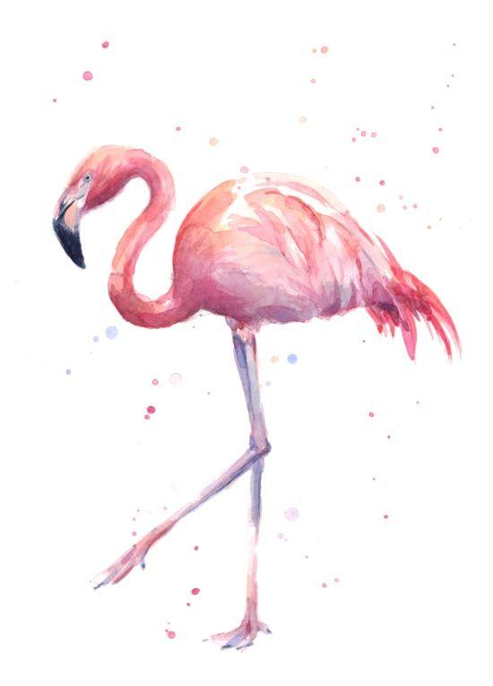 Красивые картинки фламинго для срисовки - интересная подборка 8