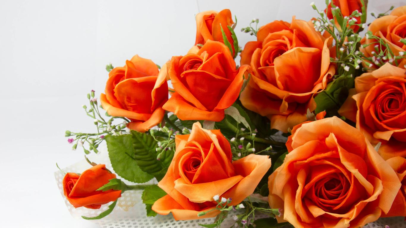 Красивые обои розы на рабочий стол - интересная коллекция 6
