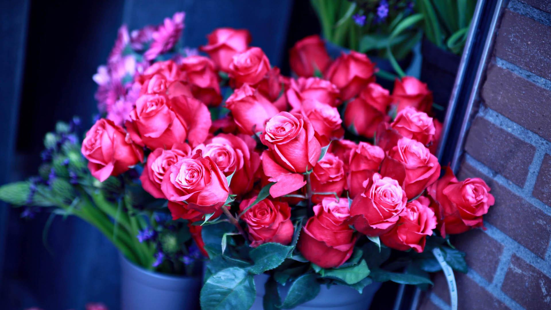 Красивые обои розы на рабочий стол - интересная коллекция 7