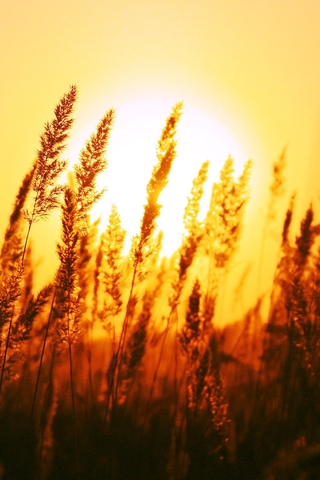Крутые и красивые картинки на телефон закат, закат Солнца 14