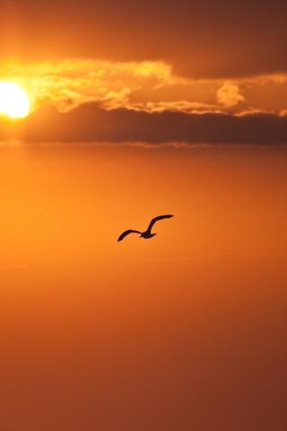 Крутые и красивые картинки на телефон закат, закат Солнца 21