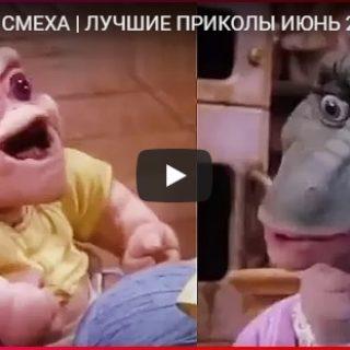Лучшие видео приколы до слез про людей и животных - подборка