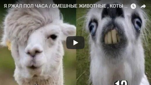 Очень смешные и ржачные видео приколы за июнь 2018 - сборка №109