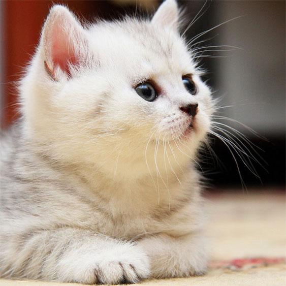Прикольные и красивые картинки на аву кошки и котики - подборка 10